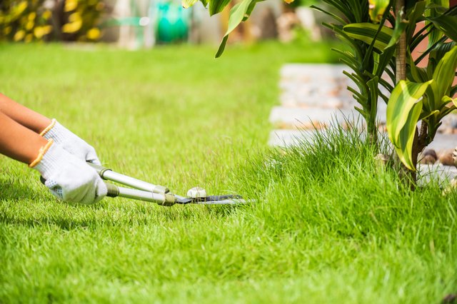 <p>Everything you need to maintain your lawn throughout the year</p>