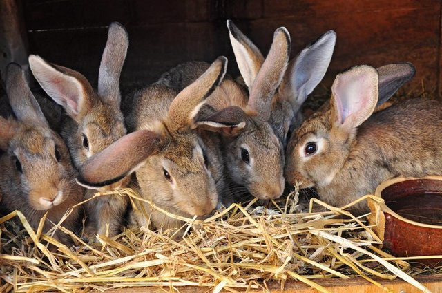 Thousands of people have signed a petition objecting to a rabbit food production facility in Derbyshire.