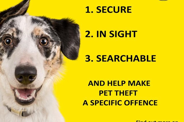 Neighbourhood Watch has launched a new campaign to prevent dog thefts.