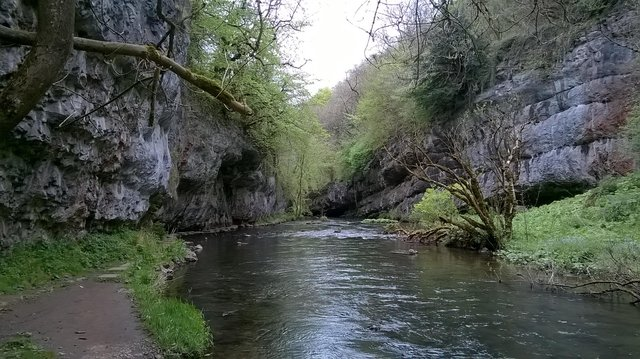 Enjoy a walk alongside a river in the Wye Valley and see if you spot Derbyshire's iconic bird, the dipper, bobbing up and down on the rocks.