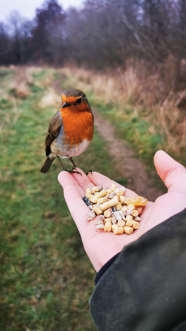 Katie Wilson built up a relationship with little 'Bobbin Robin', while capturing nature photos around her home in Clowne.
