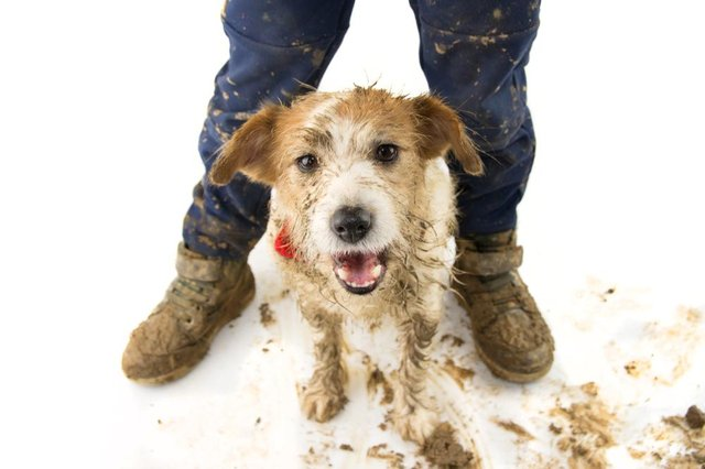 Ideally, dogs should not have be given an all-over wash more than once a month to avoid their fur being stripped of beneficial oils. Photo: Shutterstock/smrm1977