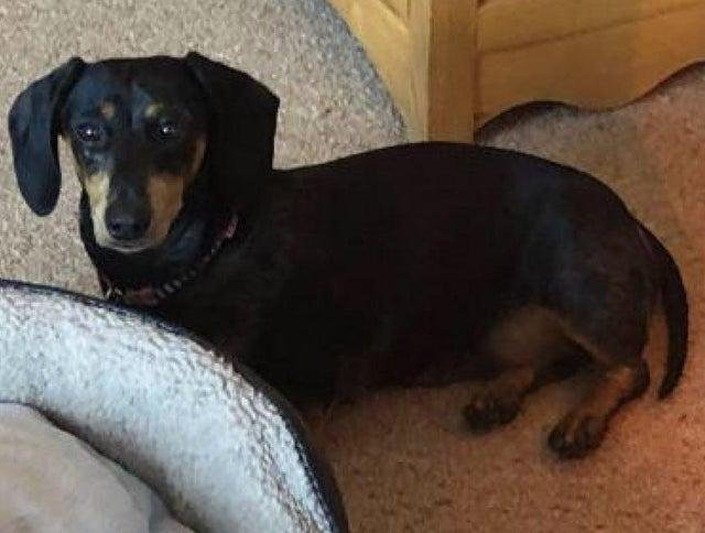 Minnie was handed to a vet in Loughborough safe and unharmed