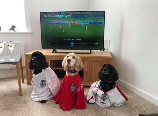 Even pooches donned their England shirts to cheer on the team ahead of their 4 nil victory over Ukraine in the Euros yesterday. Submitted by Mary Wigmore.