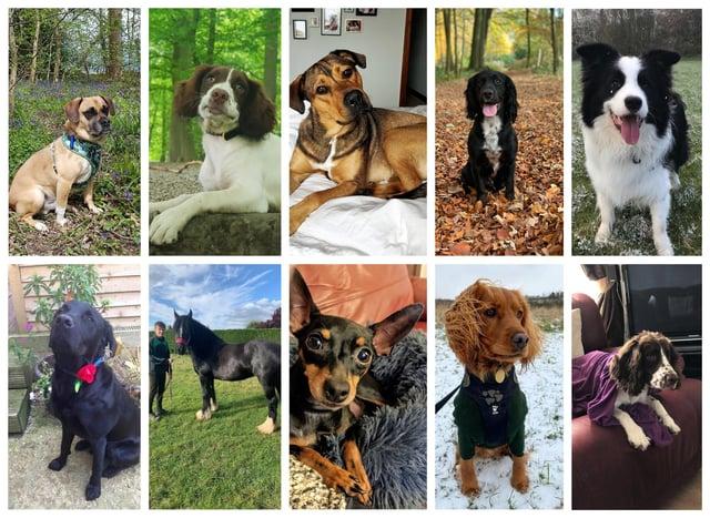 Our Top Pet finalists. Top (L-R) Stanley, Hunter, Polly, Edward, Bandit. Bottom (L-R) Jake, Delilah, Joshi, Finny, Ralph