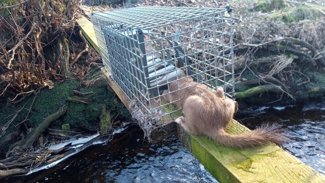 The animal had clearly been trying to get out of the trap, the campaigners said.