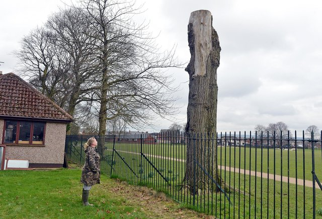 Chesterfield woman Carol Booth was angry the council had left a dead tree outside her garden.