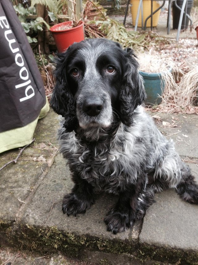 Jane says she has struggled to sleep ever since Blue (pictured) went missing on June 14