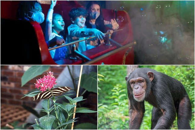 Great days out for the family at Alton Towers (photo: Daniel Lewis), Twycross Zoo (photo: Shutterstock/Crystal Alba) and Tropical Butterfly House.