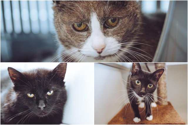 Could you give one of these cats a loving home?