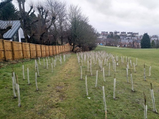 Some of the new saplings planted by Chesterfield Borough Council in Spital Park, which have since been removed