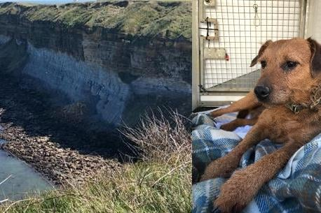 Chesterfield dog Frank and the cliff he fell down in Cayton Bay, North Yorkshire. Image: RSPCA
