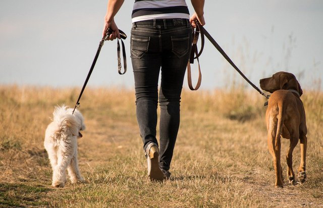 The plan is to create a dog-walking area in the field