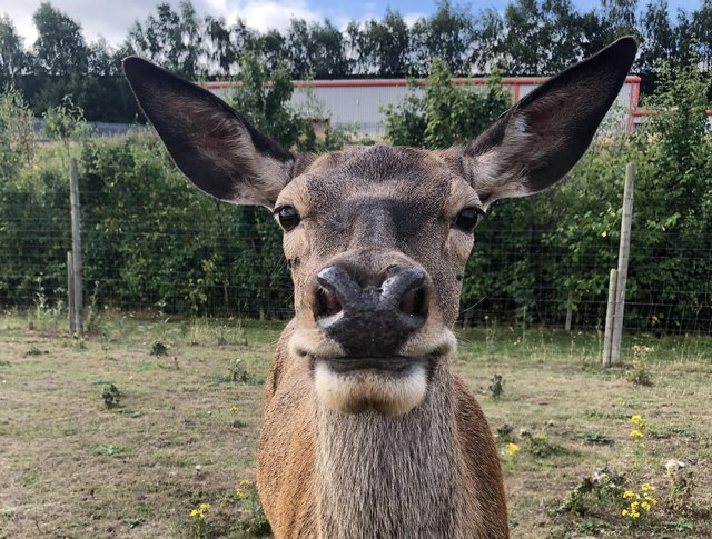 Enjoy a private walk with a friendly alpaca, hold a rabbit, guinea pig or reptile, feed the meerkats, or round up a chicken for a cuddle and collect half a dozen eggs to take home with you. Go to www.astonspringsfarm.co.uk
