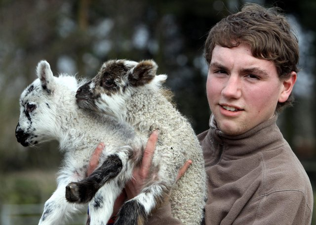 Matlock Farm Park is aiming to reopen on April 12. Volunteer Aaron Hughes is pictured with three-day-old Suffolk-cross Highland lambs.
