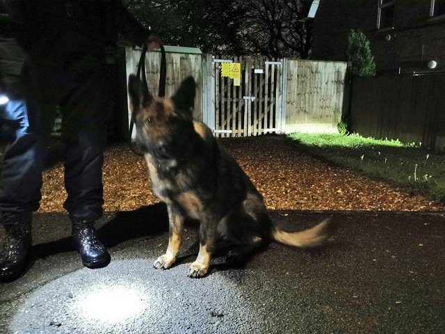 Derbyshire police dog Skye helped to track down a vehicle theft suspect.